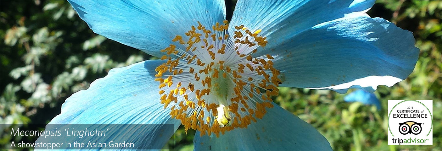 homepage-feature-photo-template_1400x500_blue-poppy-with-Trip-Advisor