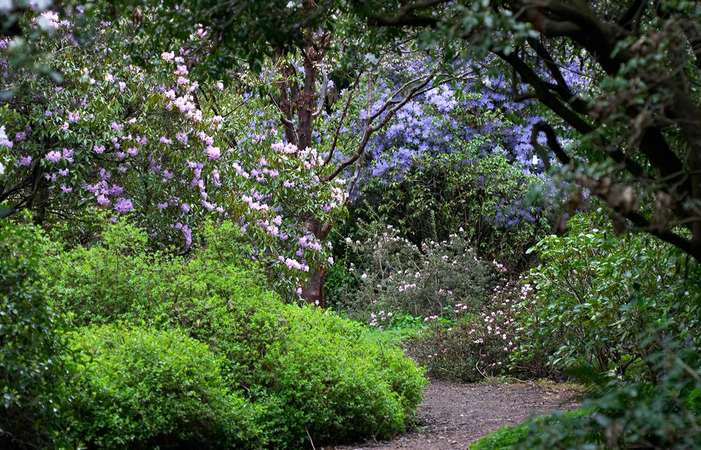 David C. Lam Asian Garden