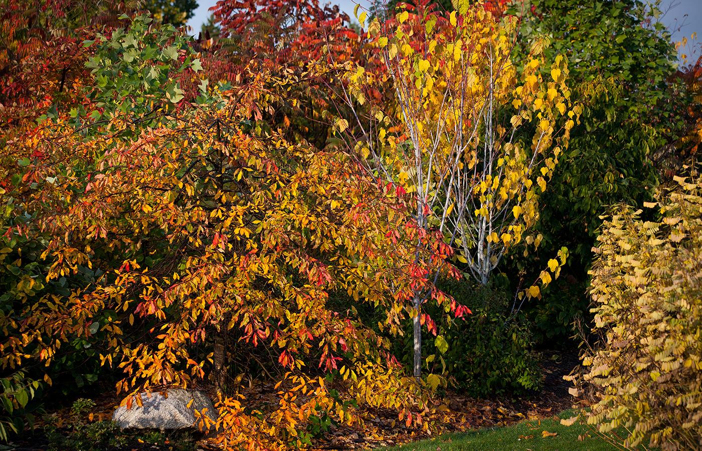 Garden Highlights | UBC Botanical Garden
