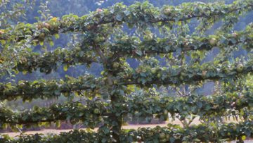 Fruit-Tree-Disease-Control_700x394