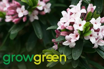 Grow Green Guide