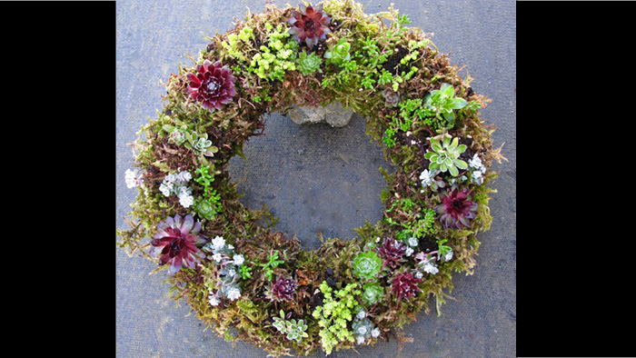 Sedum wreath