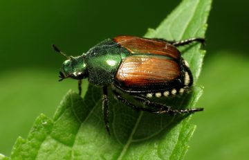 Protect Gardens and Lawns from New Invasive Species – Green Thumb News