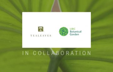UBC Botanical Garden and TEALEAVES take unique collaboration to World Biodiversity Forum